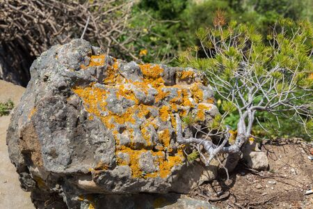 View of the stone surface details covered lichens in sunny day.  Stockfoto