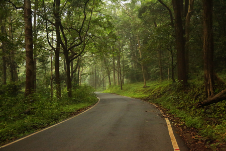 Highway in the rain forest