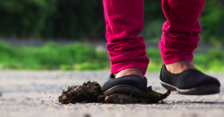 Young woman leg and foot stepping on cow dung Stock Photo