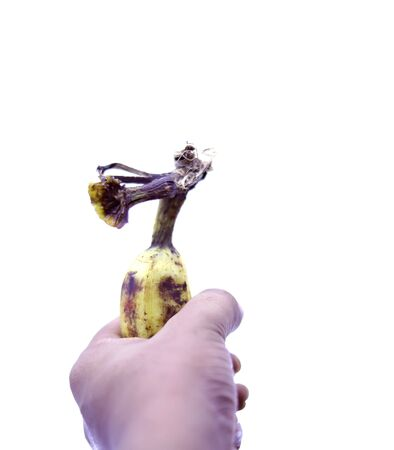 Human Hand Holding Banana Fruit Nutrition Concepts 写真素材