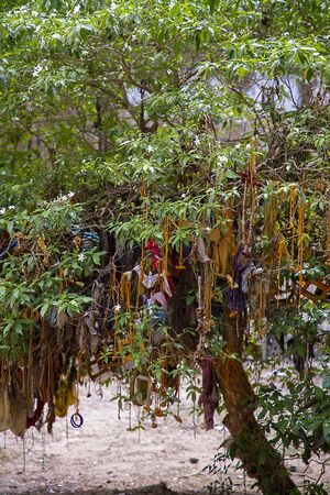 Indian tradition or worshiping tree, South Asian Temple Stock Photo