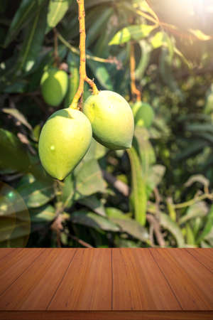 Mango garden with fruits and wooden table backgrounds.