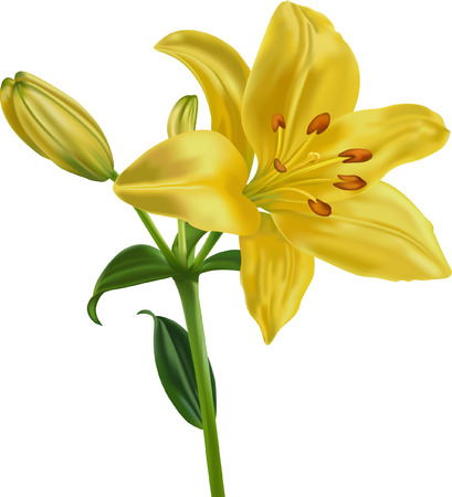 The yellow lily on a white background is executed with mesh tool