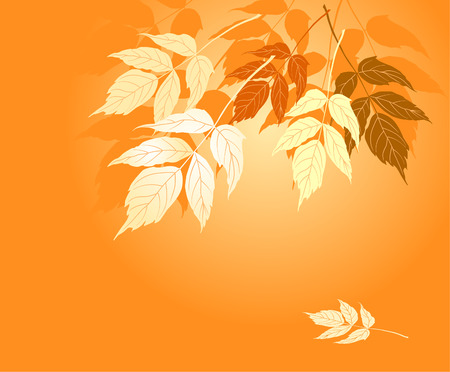 Autumn yellow leaves fall on the ground Vector