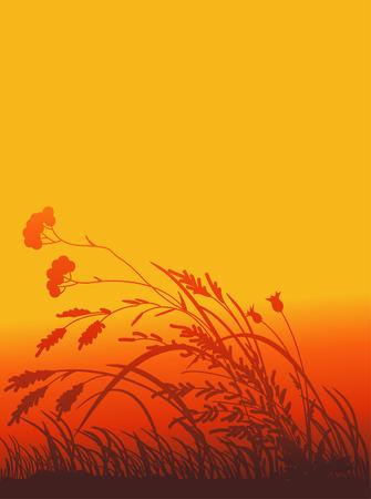 Silhouetten eines Gras und Farben auf dem Hintergrund der roten Abendhimmel
