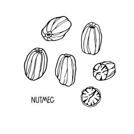 Nutmeg sketch set. Hand drawn vector spices. Culinary plant. Doodle Outline illustration for cafe, spice shop, menu Organic, fresh cooking, healthy diet ingredient. Black and white isolated elements Imagens - 156617235
