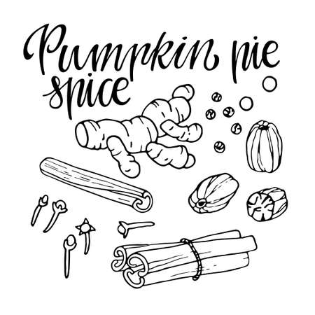 Pumpkin pie spice set. Hand drawn Autumn elements with lettering. Doodle Outline vector illustration. Organic fresh cooking, healthy diet ingredient. Organic product sketch. Flavor cooking ingredient Imagens - 156739221