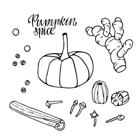 Pumpkin spice set. Hand drawn Autumn elements with lettering. Doodle Outline vector illustration. Organic, fresh cooking, healthy diet ingredient. Organic product sketch. Flavor cooking ingredient. Imagens - 157048918