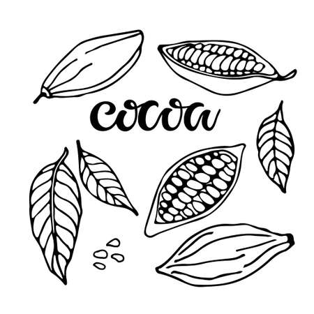 Cocoa set. Hand drawn vector Cocoa beans, leaves sketch and Cocoa text on white background. Organic product Doodle sketch for cafe, shop, menu. Plant parts. Ilustração