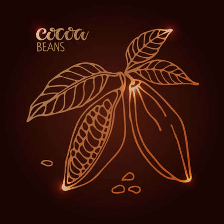 Shining Cocoa beans with leaves sketch and handwritten Cocoa beans lettering on brown background. Doodle Outline illustration for cafe, shop, menu.  Organic food sketch