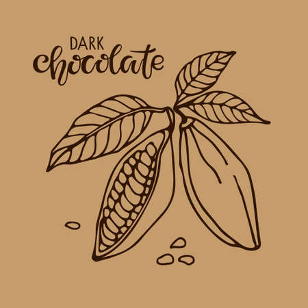 Vector handwritten Dark Chocolate text and Cacao beans with leaves sketch on brown background. Doodle Outline illustration for cafe, shop, menu. Organic food sketch. Ilustração