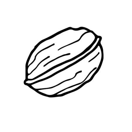 Walnut. Hand drawn vector nut. Doodle Outline illustration. Organic, fresh cooking, healthy diet ingredient. Organic product sketch. Walnut Icon. For label template, packaging, farm market emblem Ilustração