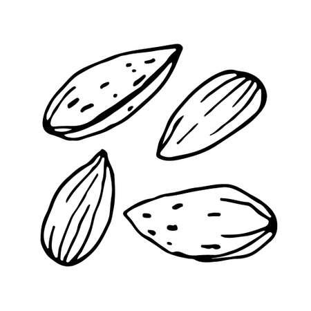 Almond. Hand drawn vector nut. Doodle Outline illustration. Organic, fresh cooking, healthy diet ingredient. Organic product sketch. Almond Icon set. For label template, packaging, farm market emblem Ilustração
