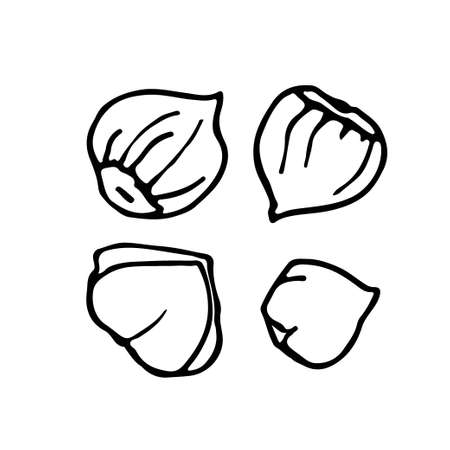 Hazelnut. Hand drawn vector nut. Doodle Linear sketch. Organic, fresh cooking, healthy diet ingredient. Organic product sketch. Hazelnut Icon set. For label template, packaging, farm market emblem