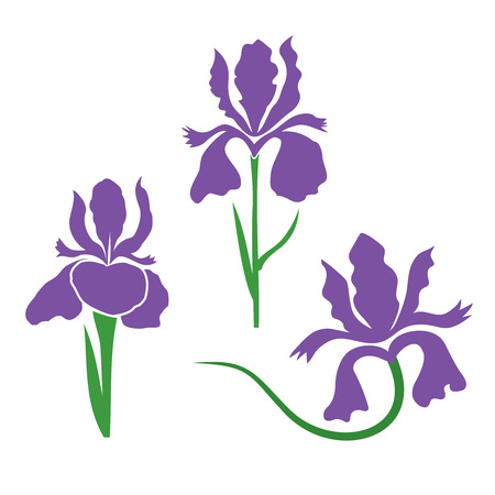 Iris Flower stylized