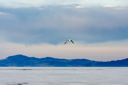 Blue sky, lake with mountain and flaying seagull, lake Baikal, Russia