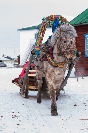 Horse pulling sleigh in winter - Mongolia