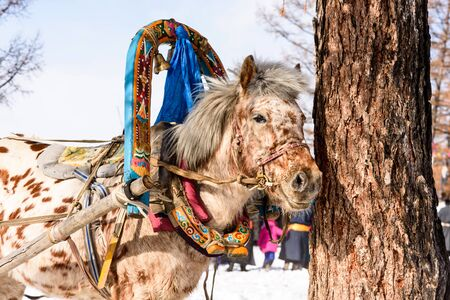 Horse stays in a yoke the bridle and the arc near the tree