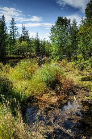 On the shore of a mountain river, stones, hummocks and forest. sunny day, natural light Banque d'images - 144153264