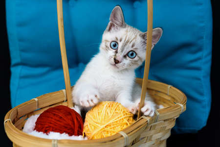 Cute tabby kitten with blue eyes sits in the basket near balls on the blue background Imagens