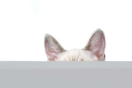 Ears of a cat over white background