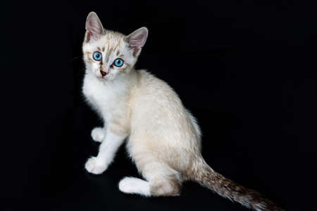Cute tabby kitten with blue eyes on the black background looking at camera Standard-Bild