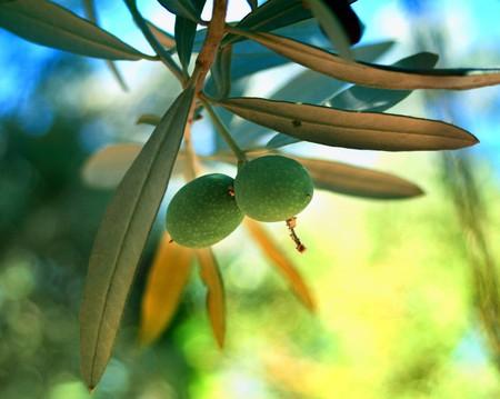 Aegean Pearl; Olives