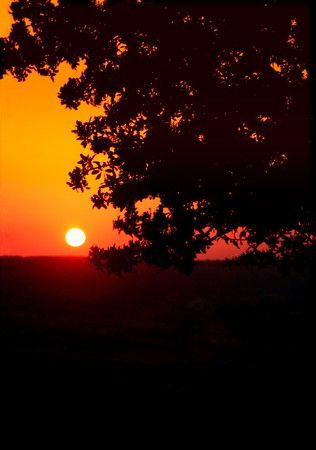 The orange sunset behind a tree.