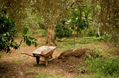 A wagonwheelbarrow next to manure hill and spade, under olive trees.