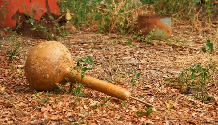 dried gourd: Dried dipper gourd on a autumn ground. Stock Photo