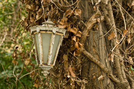 A white old lamp post hanging on a tree hugged by a vine on an autumnal day  photo