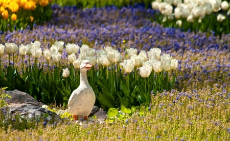 statuary garden: A Stone Duck Statue Made of Stone in a Yard Setting With Flowers Stock Photo