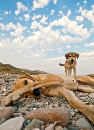Two dogs playing on a rocky beach