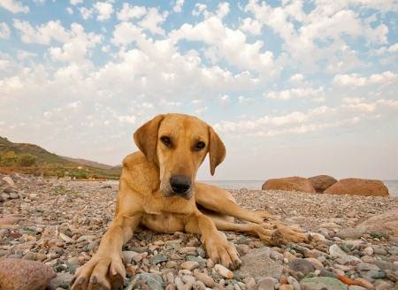 dog rock: A dog playing on the rocky beach.