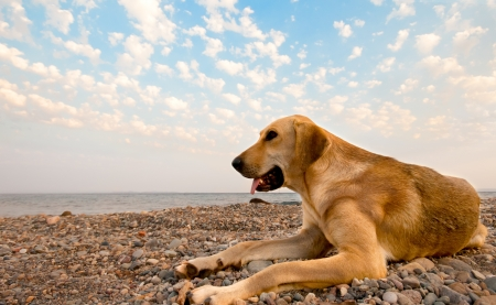 A dog laying on the rocky beach Stock Photo - 16865625