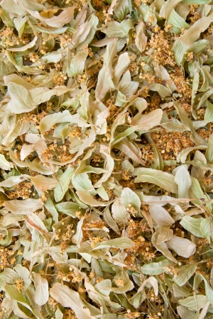 tilia: Dried Organic Lime Tree BlossomsKnown as Tilia, Linden, Basswood, or Lime Tree Blossoms as a background