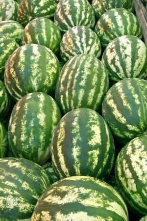 Organic Ripe Watermelon Heap at a street market