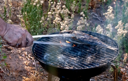 cichlids: Sea Bream Fish Grilled and taken by off the grill Stock Photo