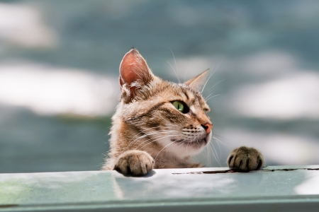 Hungry Cat Looking Into Window Stock Photo