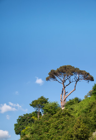 Pine Tree Against The Blue Sky photo