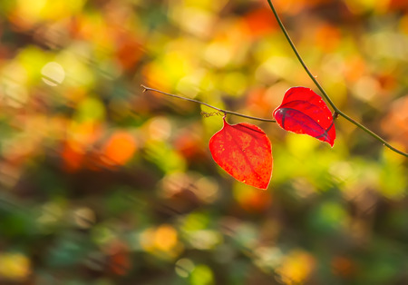 Red leaves on a colorful background