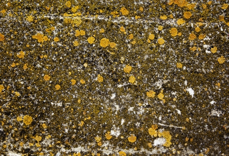 Lichens on stone - natural abstract grunge background photo