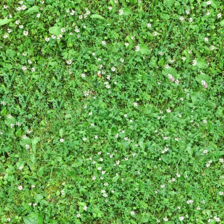 Seamless green grass background with clover leaves and small pink flowers photo