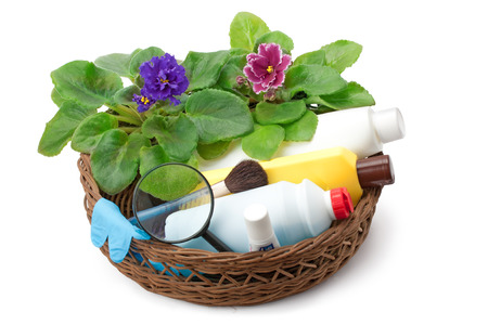 pesticides: african violet saintpaulia chemical fertilizers ,pesticides and insecticide arranged in a basket Stock Photo