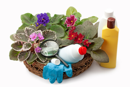 african basket: african violet saintpaulia chemical fertilizers, pesticides and insecticide arranged in a basket Stock Photo