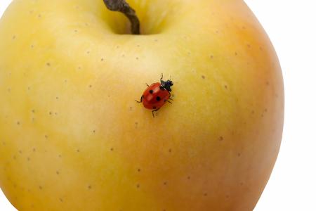 fetching: Ladybug on yellow apple. Yellow apple.