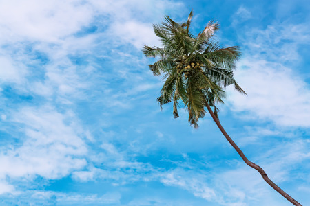 Exotic view with palm trees against blue sky