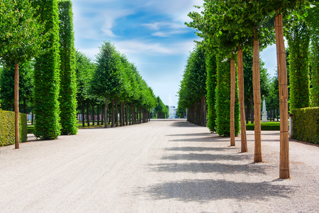 hedges: Beautiful garden with green hedges with trees, with broad alleys .