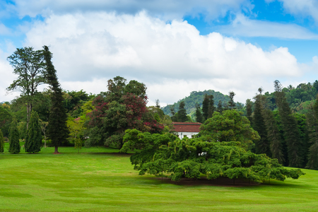 plants and trees: Large evergreen trees by a green lawn in Peradeniya Botanical Gardens. Kandy, Sri Lanka. Stock Photo