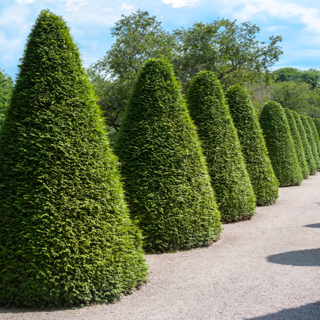 hedges: Beautiful garden with green hedges with trees.